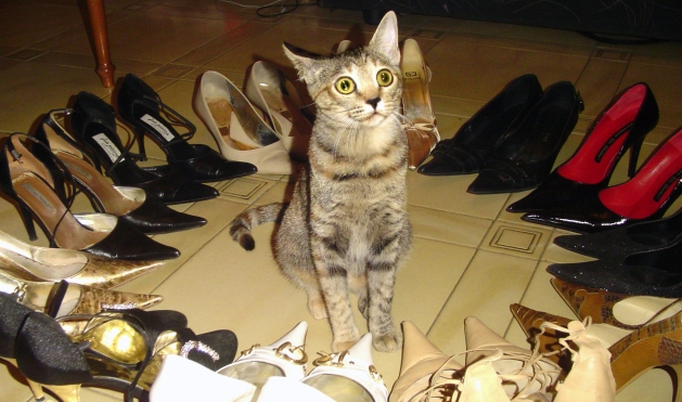 cleo scarpe