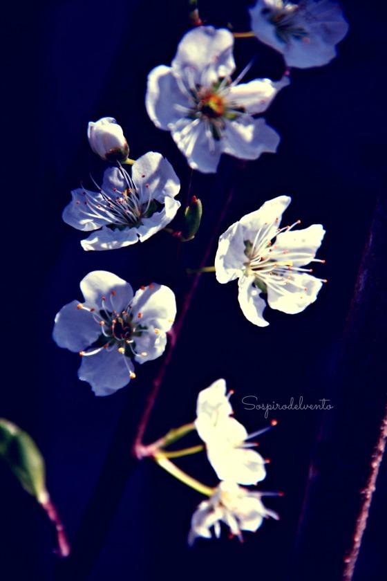 Spring11_2