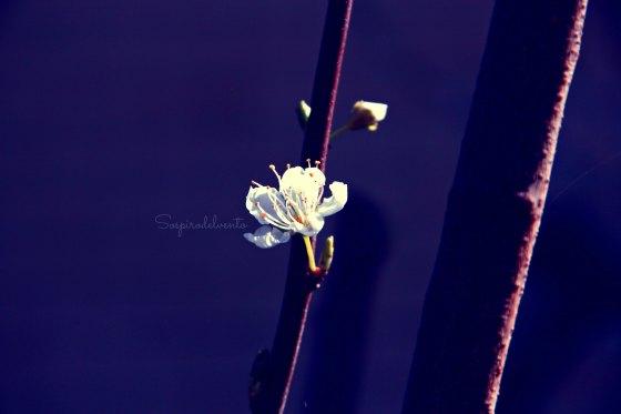 Spring12_2