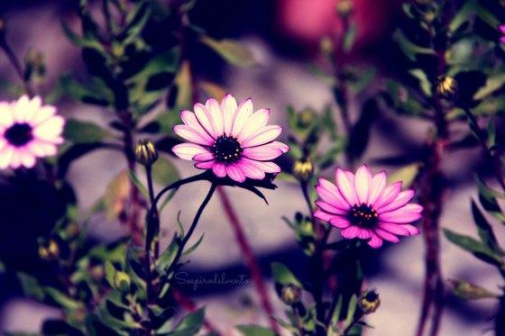Spring2_2