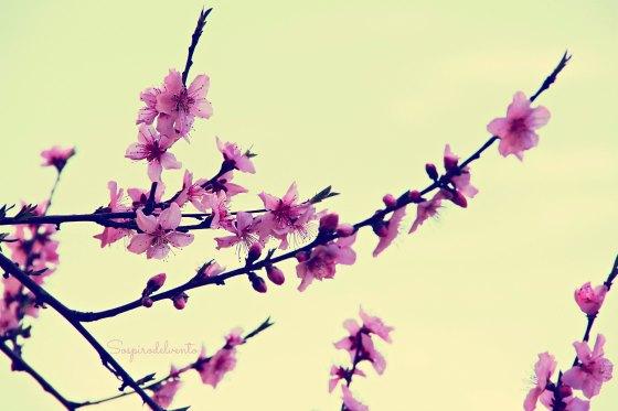 Spring3_2