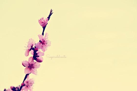 Spring4_2