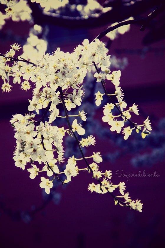 Spring6_2