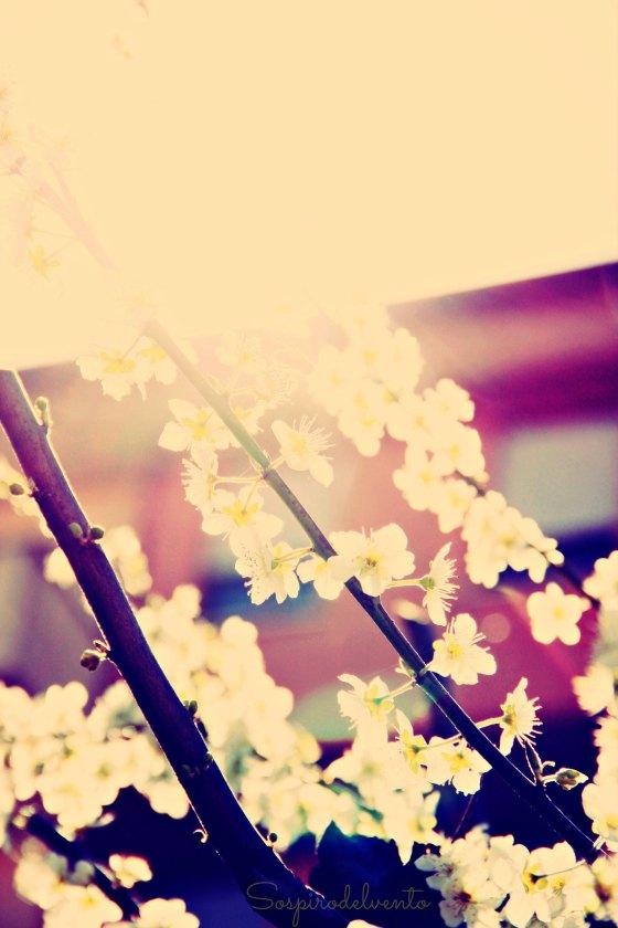 Spring8_2