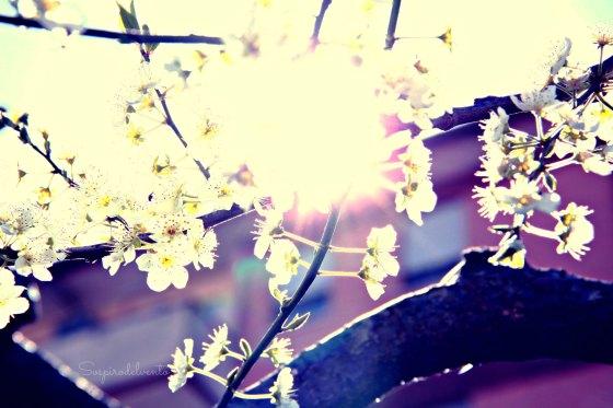 Spring9_2